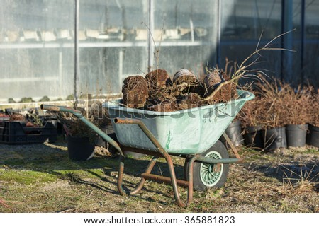 A green garden wheelbarrow full of discarded plants. Greenhouse in background. - stock photo