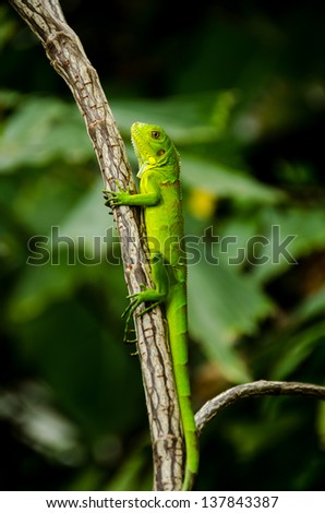 A green lizard sitting on a branch of a tree - stock photo