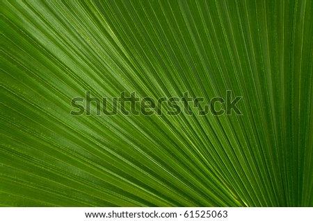 A green palmate palm frond in spiraling angle. - stock photo