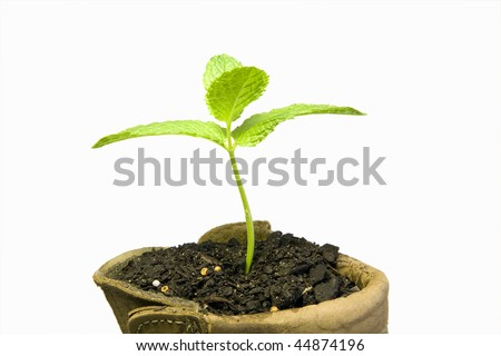 A green sprout from a boot - stock photo
