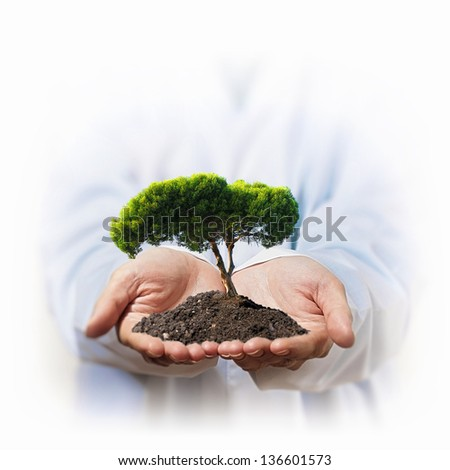 A green tree in the hand of a businessman - stock photo