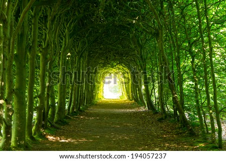 A green tunnel of trees with light at the end, on a nice summer's day in a park. - stock photo