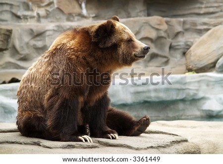 a grizzly bear sitting on a rock formation at the zoo - stock photo