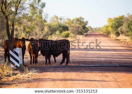 A group of cows graze by the side of the Plenty Hwy near Mount Riddock cattle station in Northern Territory, Australia - stock photo