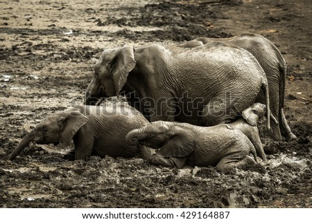 A group of elephants having a water-bath, Madikwe Game Reserve - stock photo