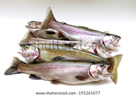 A group of fresh lake trout. - stock photo