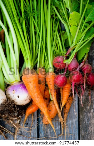 A group of fresh, root vegetables. - stock photo