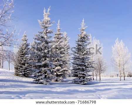 A group of frosty, snow-covered trees in a city park - stock photo