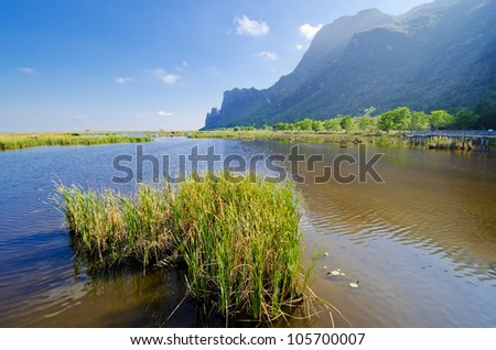 A group of grass in a wonderful swamp - stock photo