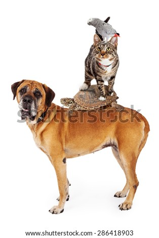 A group of household pets stacked up together - dog, turtle, cat, bird - stock photo