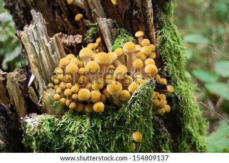 A group of mushrooms on the stud - stock photo