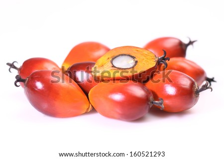 A group of oil palm fruits on the white background - stock photo