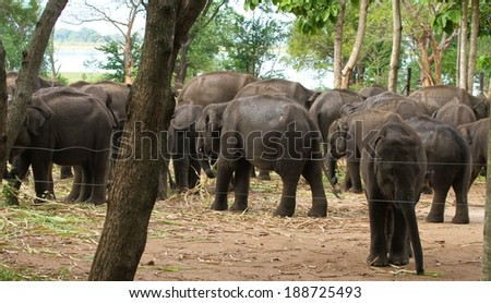 A group of orphaned elephants at Udawalawe Elephant Transit Home and Information Centre Department of Wildlife Conservation Sri Lanka. - stock photo