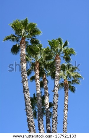 A group of palm trees against a blue sky - stock photo