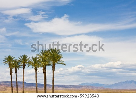 A group of palm trees in Arizona's Mojave desert. - stock photo