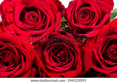 A group of red roses stacked on a table - stock photo