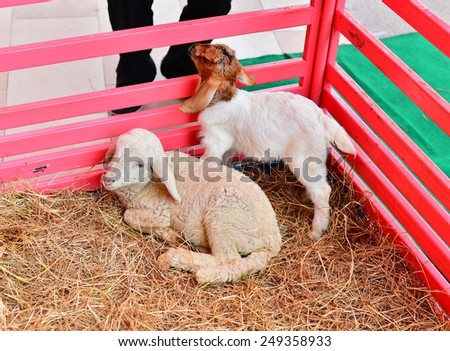 A group of sheep on the hay - stock photo