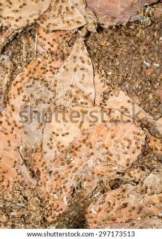 A group of termites eating dry leafs on the ground - stock photo