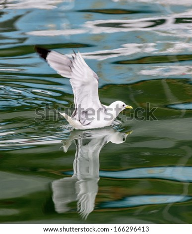 A gulls to the bay Avachinskayay - Kamchatka, Russia - stock photo
