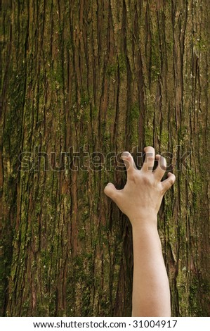 A hand grips the trunk of a cedar tree. - stock photo