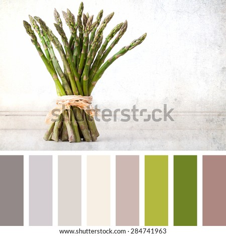 A hand tied bunch of fresh asparagus, vintage effect with space for your text. In a colour palette with complimentary colour swatches. - stock photo