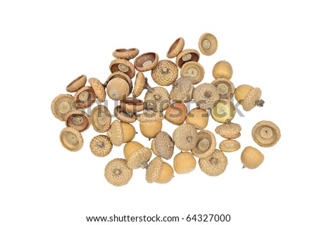 A handful of ripe acorns on white background. Separated on a white.  - stock photo
