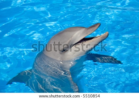 A happy Bottlenose Dolphin laughing and showing the teeth - stock photo