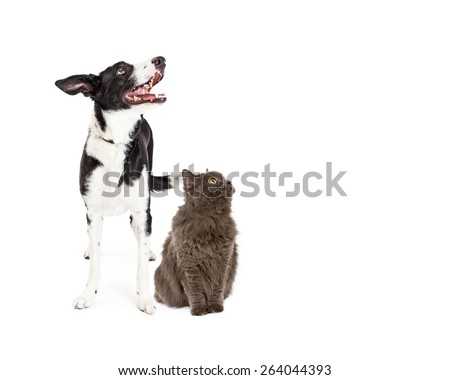 A happy crossbreed dog and a pretty gray color cat together looking up and to the side into blank copy space - stock photo