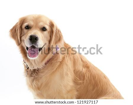 Happy dog white background - photo#18