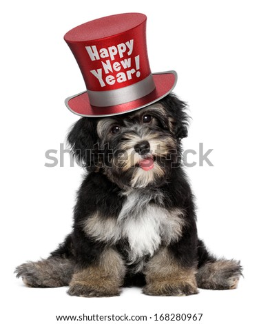 A happy smiling havanese puppy dog is wearing a red Happy New Year top hat, isolated on white background - stock photo