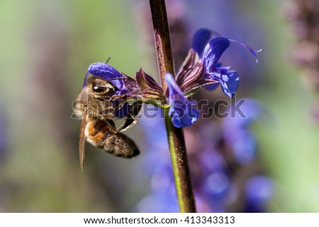 A hardworking bee - stock photo