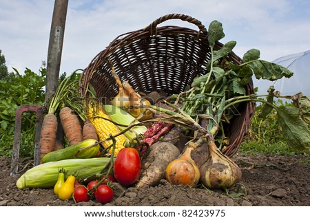 A harvest of seasnon vegetables spilling from a wicker basket - stock photo