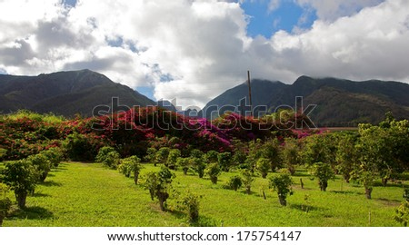 A Hawaiian fruit plantation set against large mountains - stock photo