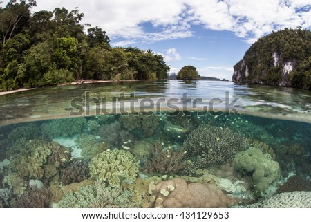 A healthy coral reef grows near limestone islands in Alyui Bay, Raja Ampat, Indonesia. This beautiful bay lies just south of the equator and is home to a wide set of tropical marine life. - stock photo