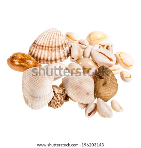 a heap of seashells isolated over a white background - stock photo