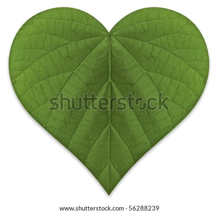 A heart shaped green leaf, symbolizing love for the environment and a sustainable future. - stock photo