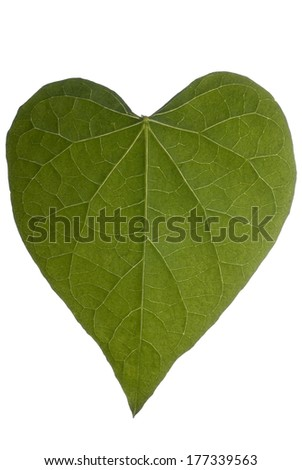 A heart shaped leaf on a white background.  - stock photo