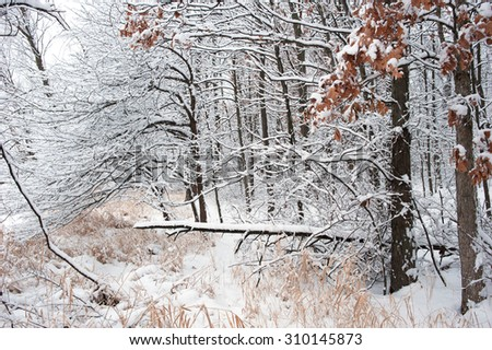 A heavy snowfall coats the trees with fresh snow during a midwest winter. - stock photo