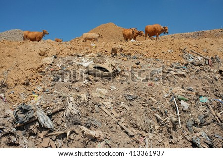 A herd of cows scavenge for food among hazardous waste and toxic trash on highly contaminated land at the biggest and most polluted landfill site on the holiday resort island of Bali, Indonesia. - stock photo
