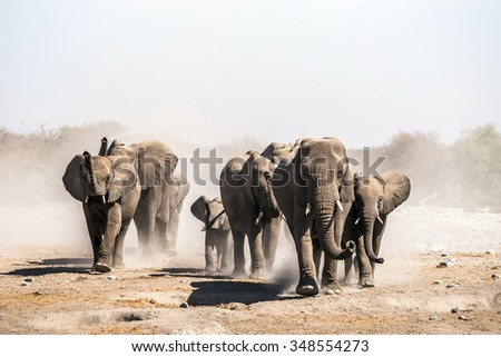 A herd of elephants approaches a waterhole in Etosha national park. Northrtn Namibia, Africa. - stock photo