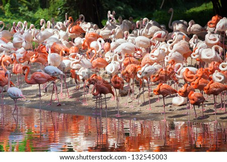 A herd of flamingos - stock photo