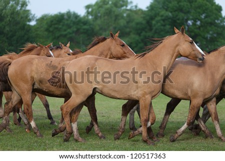 A herd of horses - stock photo