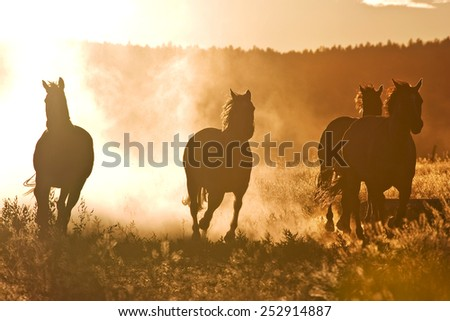 A herd of horses at dawn - stock photo