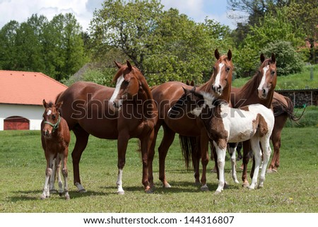 A herd of mares with foals on pasture - stock photo