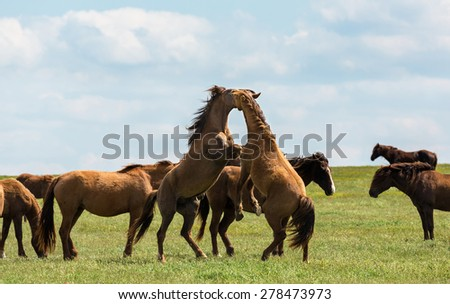 A herd of wild horses shown on Water island in atmospheric Rostov state reserve - stock photo