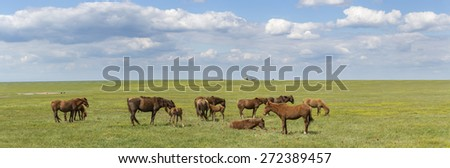 A herd of wild horses shown on Water island in atmospheric Rostov state reserve panorama - stock photo