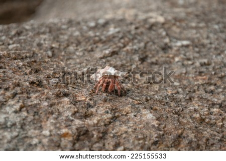A hermit crab on the rock - stock photo