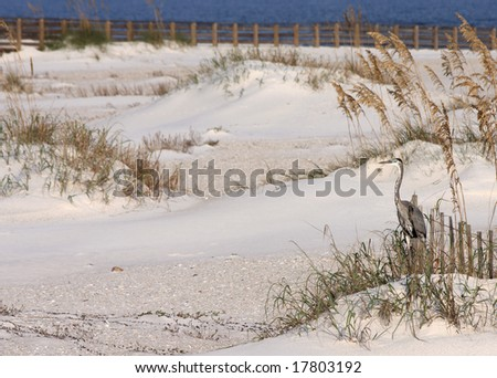 A heron standing among sea oats at the beach. - stock photo
