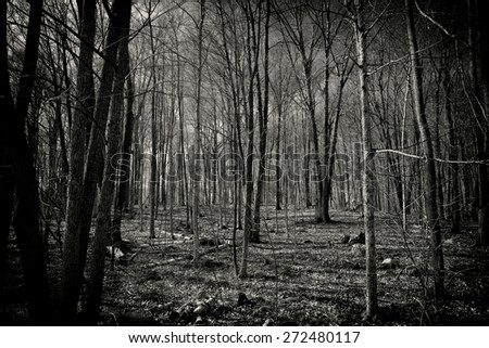 A highly dynamic black and white image of a spooky forest full of leafless, dead trees. - stock photo