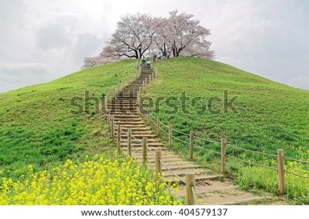 A hiking trail going up to the hilltop with beautiful sakura tree blossoms and green grassy meadows ~ Spring scenery of idyllic Japanese countryside in Saitama, Japan ( Low angel view ) - stock photo